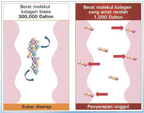 1000 Dalton, molekul kecil, rahsia penyerapan berkesan