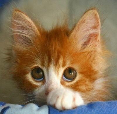 Кошки красивые фото милые фото