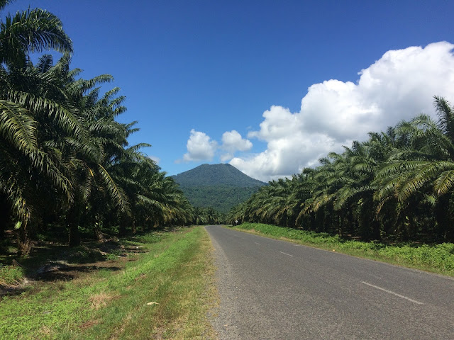 The road towards Walindi - lined by palm oil plantations with a volcano in the background