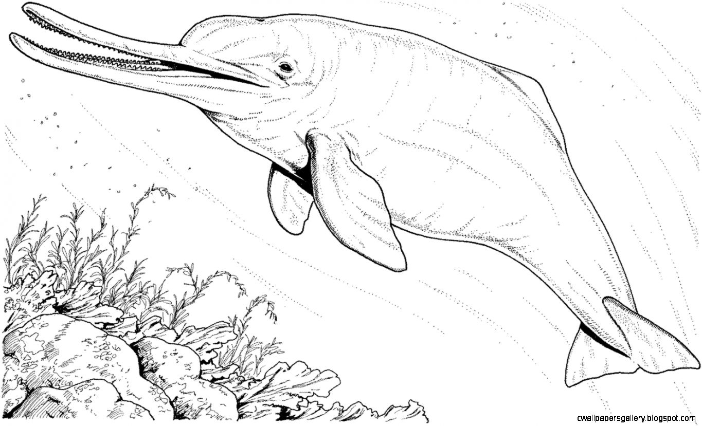 coloring page of a river - amazon river dolphin drawing wallpapers gallery