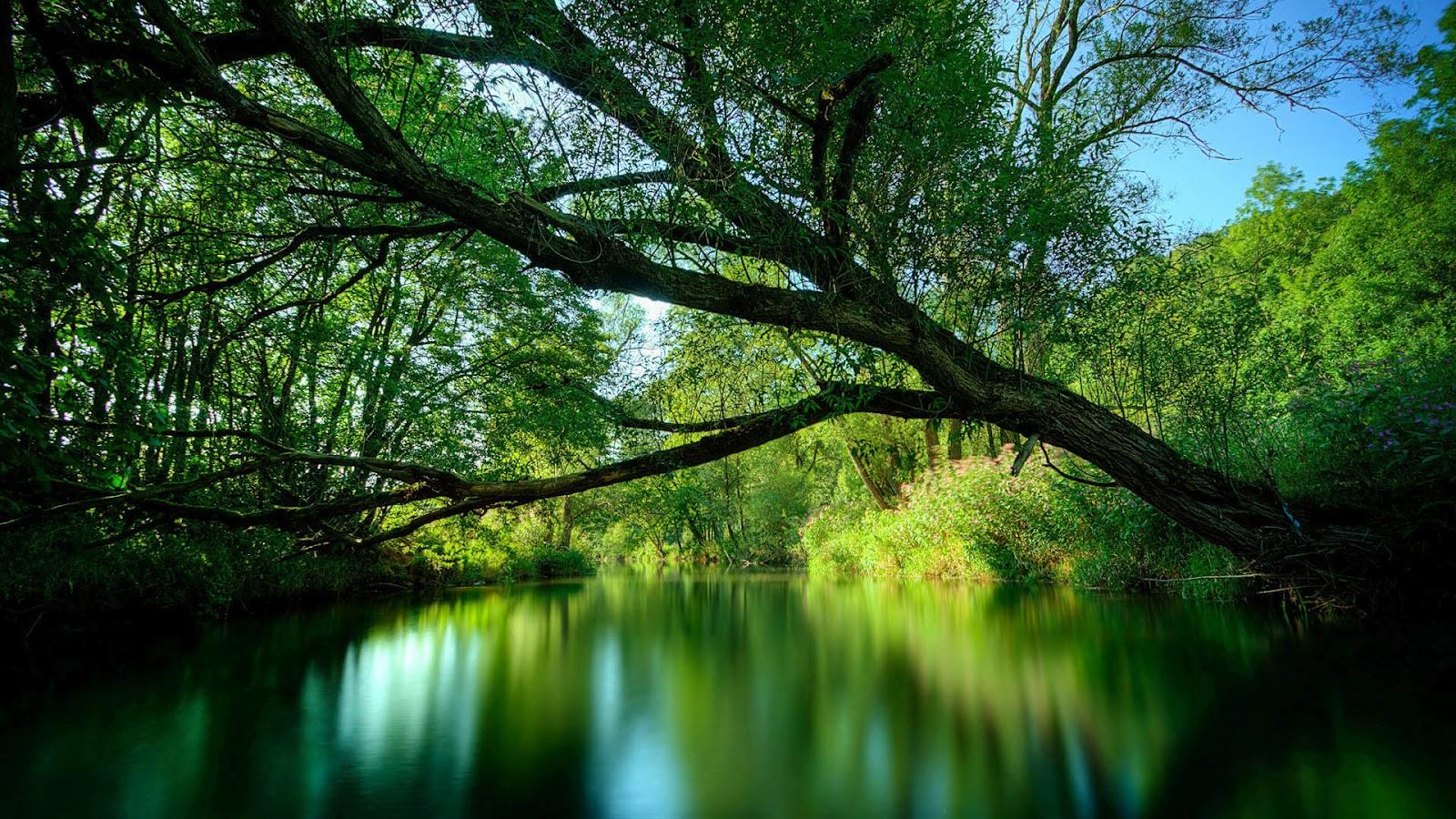 http://3.bp.blogspot.com/-PRtxQZBW74E/T0TJ4nnf_FI/AAAAAAAAEg4/-BrrrMt_1wc/s1600/Green-River-Wallpaper-1.jpg