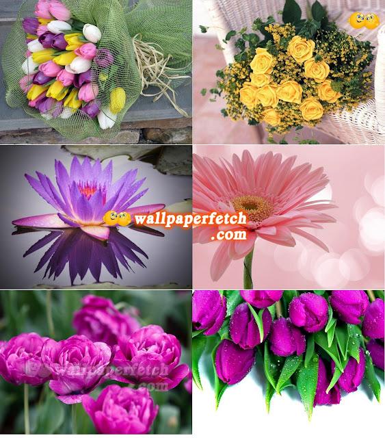 Wallpaper Fetch: HD Flowers Wallpaper Pack 28