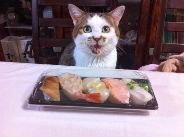 Funny cats - part 82 (40 pics + 10 gifs), cat photo, cat wants to eat sushi