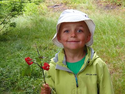 pięknoróg największy, Calocera viscosa, grzyby lipca, grzybobranie na Orawie, Orawa, Lipnica Wielka