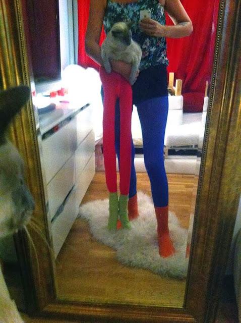 Коты носят чулки