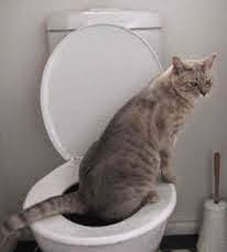 Cara Mengatasi Kucing Mencret diare