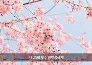 เทศกาลซากุระเชจู