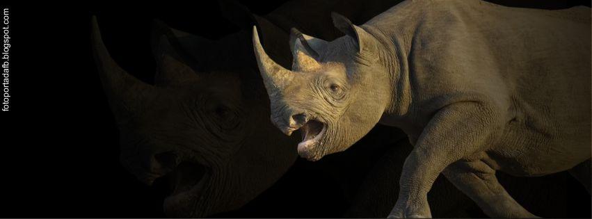 Foto portada para Facebook como tema un rinoceronte