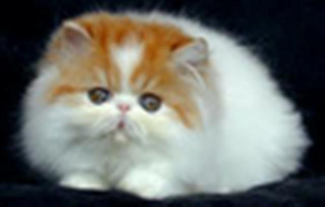 Zidan Anak Tinggar Jambe Dot Com Aneka Gambar Kucing