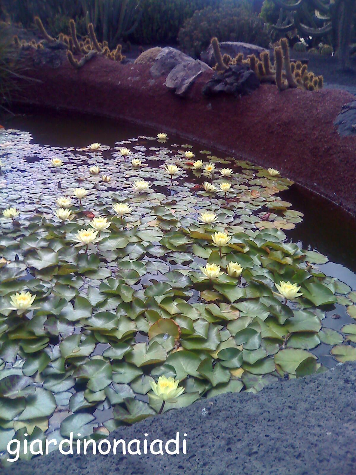 Il giardino delle naiadi laghetti in un vulcano for Laghetti nei giardini