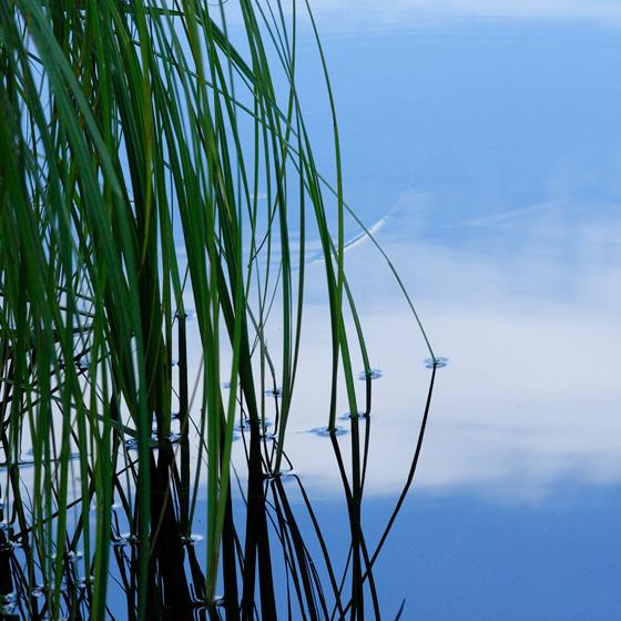eau; herbe; aquatique; reflet; étang; bleu; zen