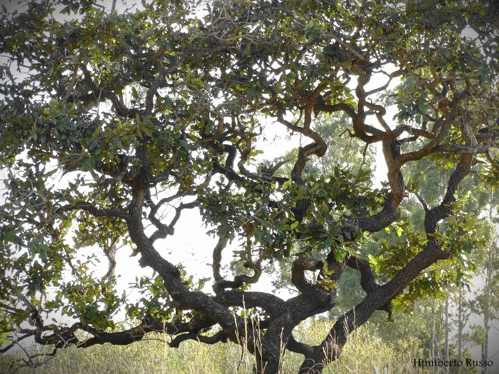 A vegetação do Cerrado é influenciada pelas características de solo, clima e fogo. A baixa fertilidade e a elevada toxicidade do solo são associadas ao nanismo e a tortuosidade da vegetação.