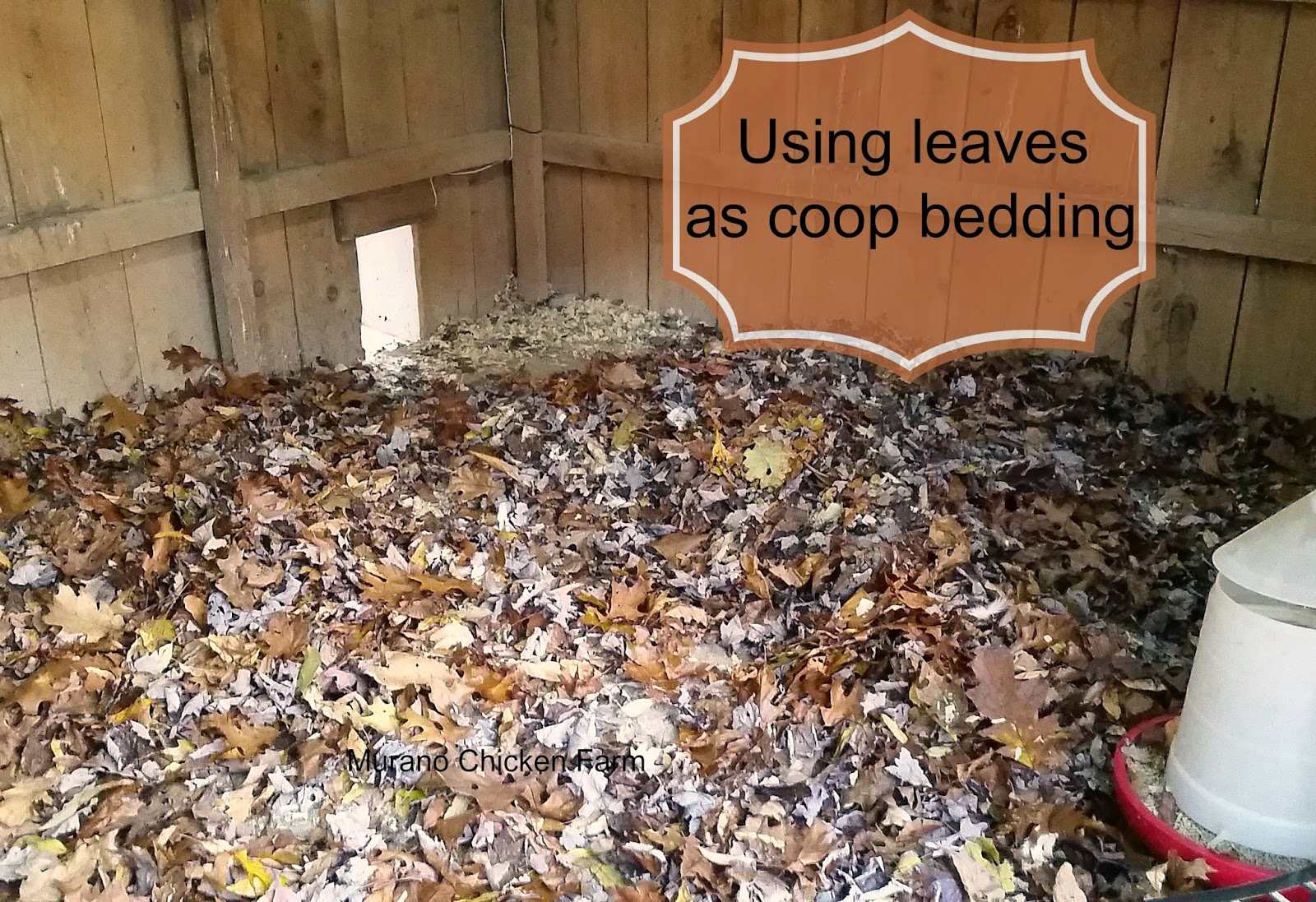 using leaves as chicken coop bedding