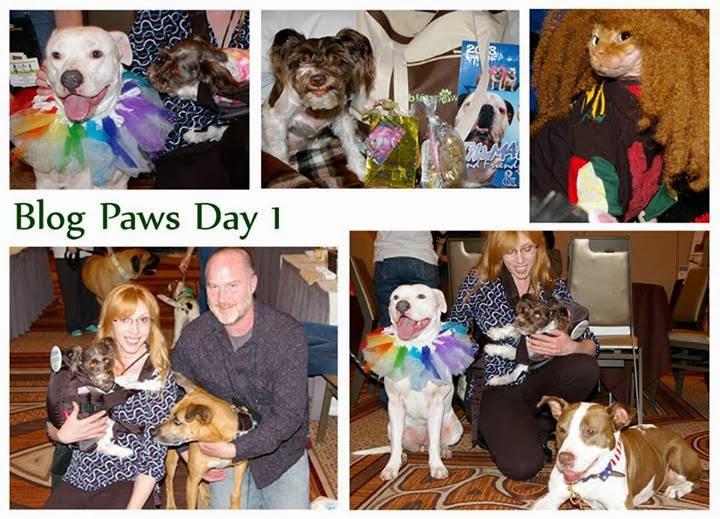 Photo collage of Pixel meeting several dogs, cats & people at Blog Paws Conference