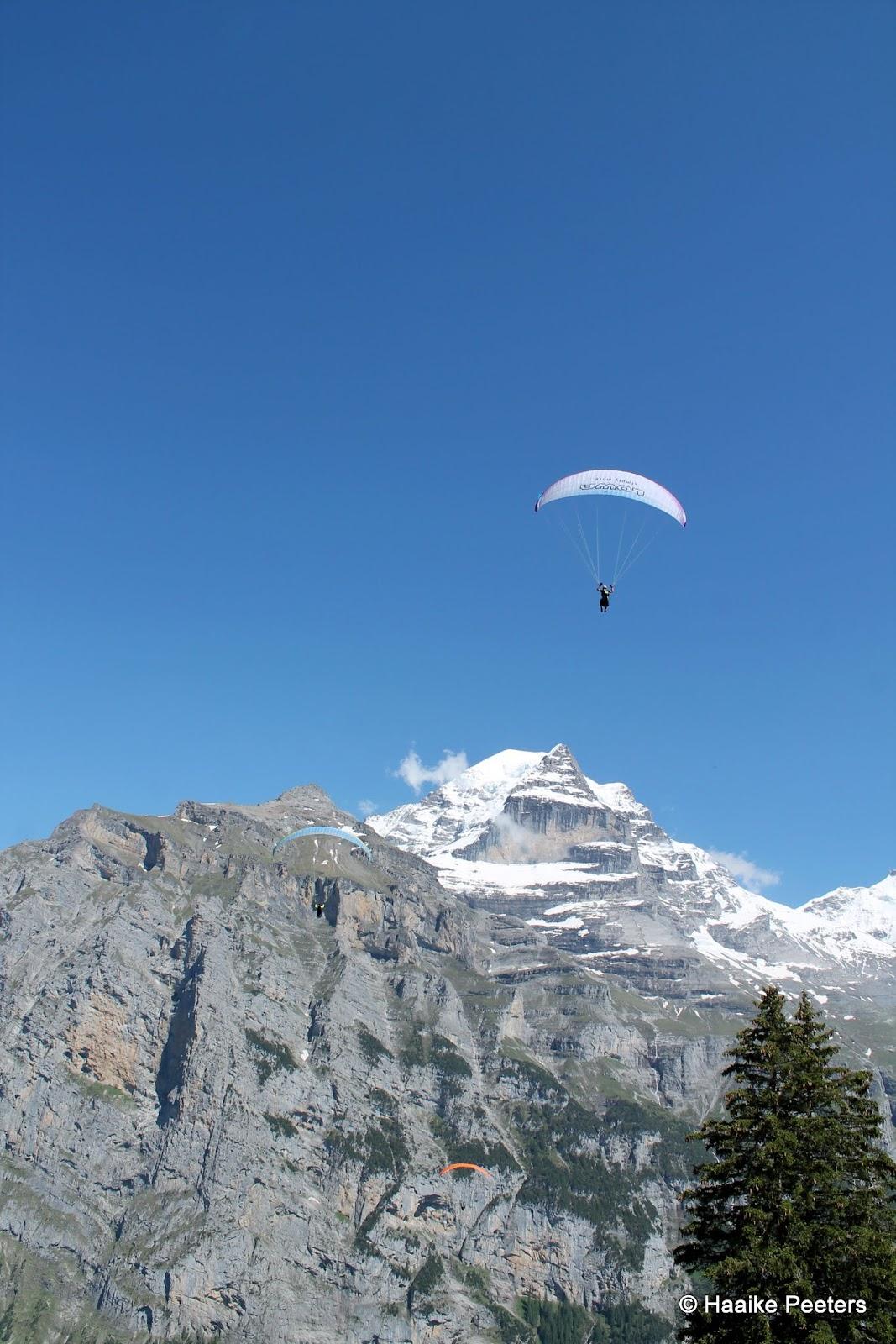 Jungfrau (Le petit requin)