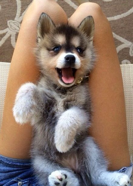 5 cutest smiling puppy faces you have ever seen