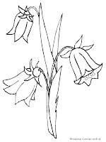 Mewarnai Gambar Bunga Terompet
