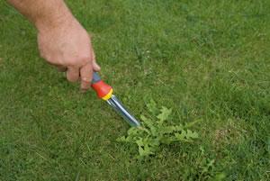 Crea tu jard n mayo 2013 for Como evitar que salga hierba en el jardin