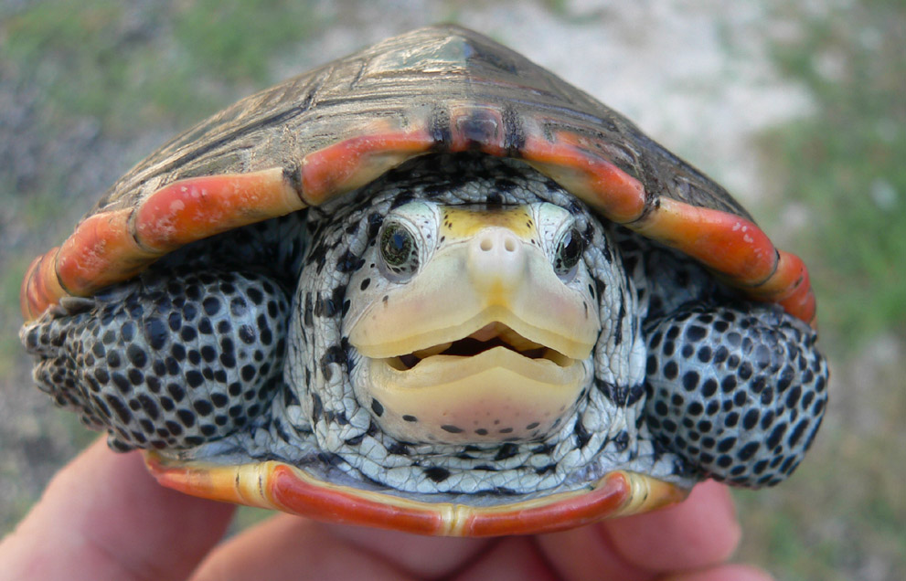 Zoo Animals: Funny Terrapin Pictures/Images 2012