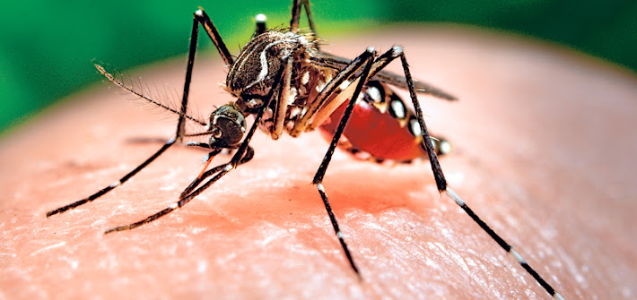 Virus Zika, Puglia: 'nessun allarme, ma solo attenzione'