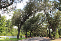 12th ave. Tree Tunnel, Pensacola, FL