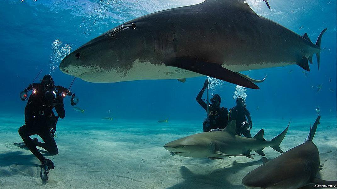 La Cueva de los Tiburones Dormidos