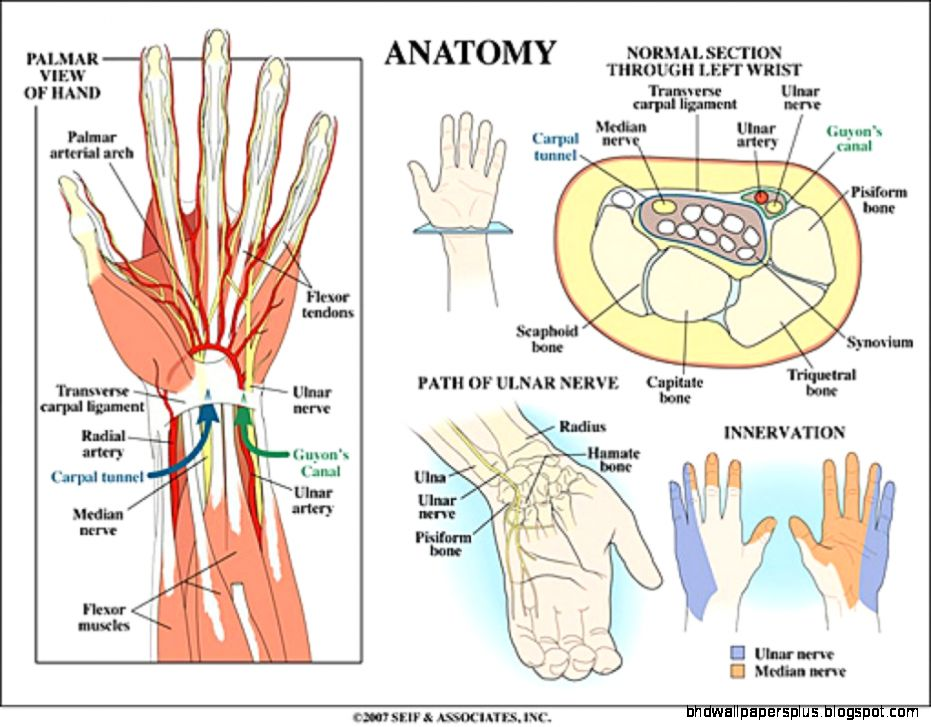 Wrist Anatomy Hd Wallpapers Plus