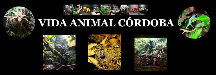 Vida Animal Córdoba
