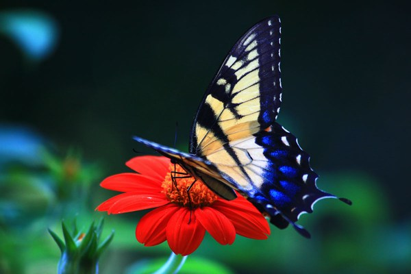 Butterfly New Images Full HD Download