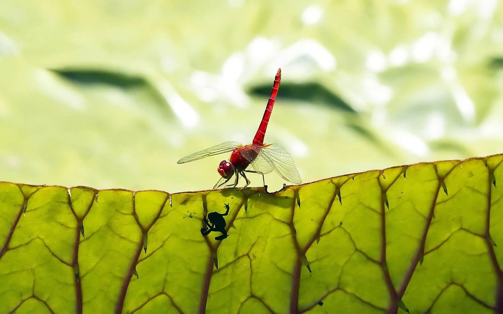 http://3.bp.blogspot.com/-PVVLTgh1mhk/UO2f-fzPRPI/AAAAAAAAREQ/iQAl5X-E_dI/s1600/Dragonfly+Wallpapers+08.jpg