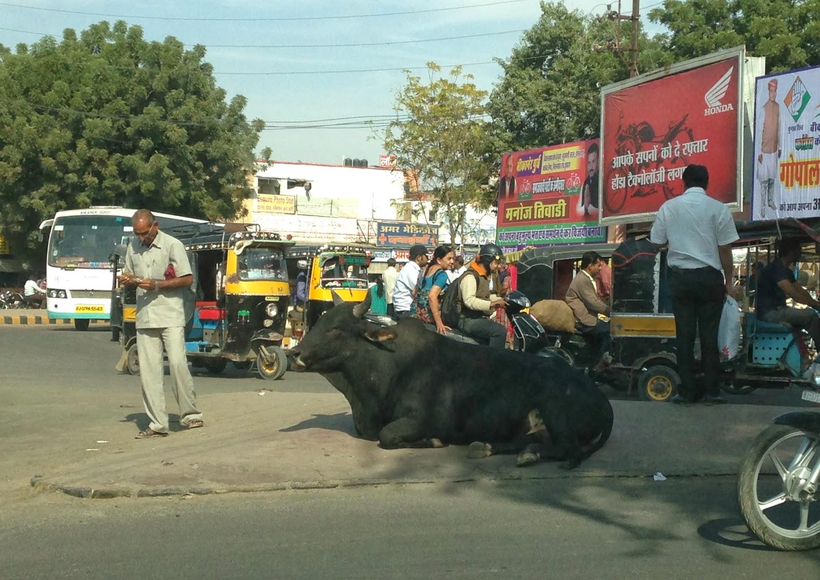 Rajasthan road traffic