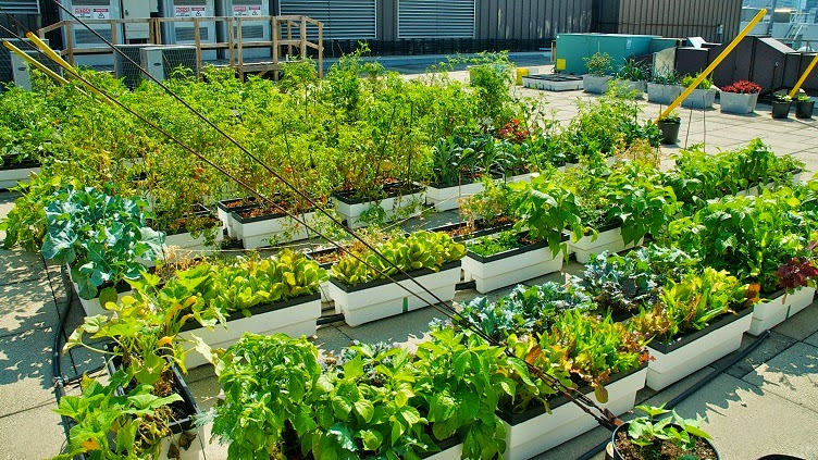 Dsc3752g roof gardening or roof horticulture or urban horticulture or intipanta f solutioingenieria Images