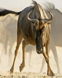 Miền Đất Serengeti Vĩ Đại - The Great Serengeti