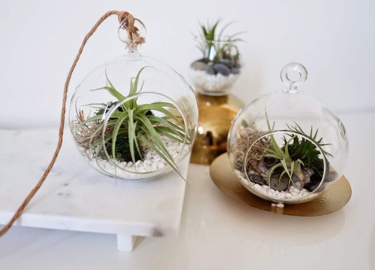 diy air plant terrarium swellmayde bloglovin. Black Bedroom Furniture Sets. Home Design Ideas