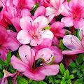 蜂,花〈著作権フリー無料画像〉Free Stock Photos