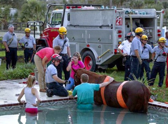 Loving Horse Rescued in Florida