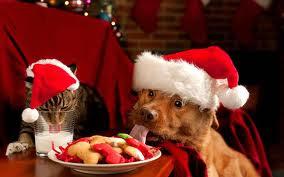 dog looking at Christmas dish