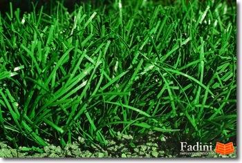 La sporturf fadini impianti s r l erba sintetica per - Erba nana per giardino ...