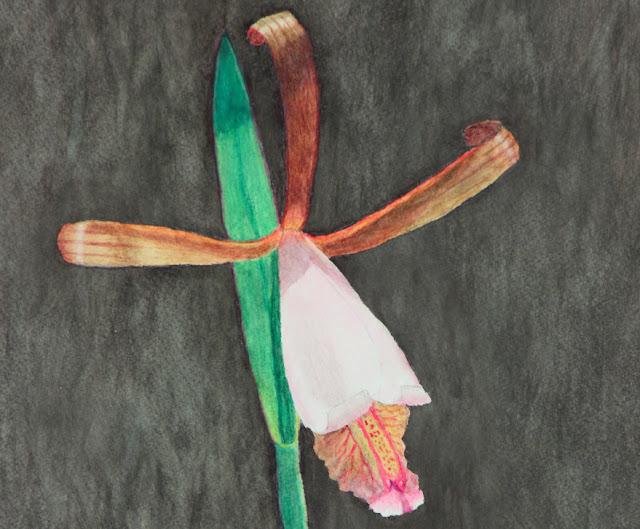 Rosebud Orchid (Cleistes bifaria) watercolor painting