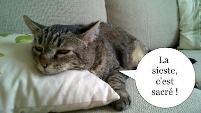 Gros chat gris qui dort sur un coussin.