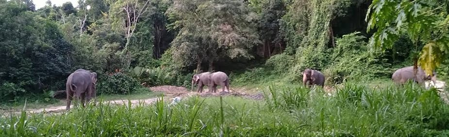 Namuang Juangle Trip Elephant Trekking at Namuang Waterfall Number 1