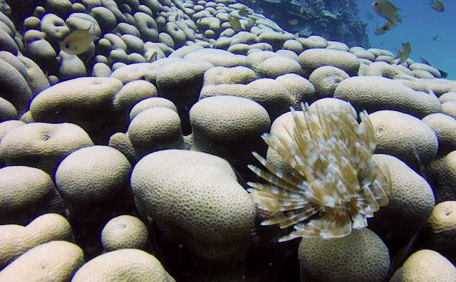 Coral's worm Mafia island Tanzania