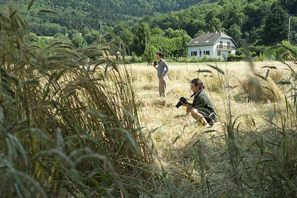 Photos de champ de blé à Montaud dans le Vercors - Isère