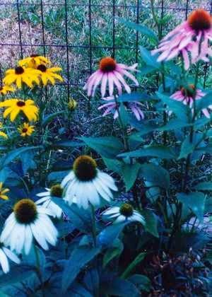 Planning My Organic Spring Garden