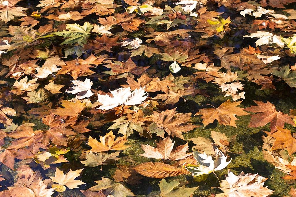 fotografía otoño El Retiro Madrid