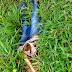 Corpo em avançado estado de decomposição é encontrado em fazenda no município de Bonito-BA