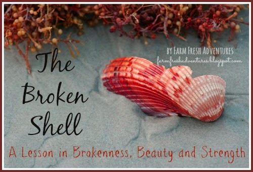 The Broken Shell: A Lesson in Brokenness, Beauty and Strength
