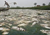 http://3.bp.blogspot.com/-PYc2Caydk38/UAVP1jg5ddI/AAAAAAAAAZQ/ZWZPBywfqdE/s1600/limbah+ke+sungai.jpg