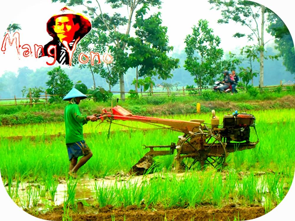 """Membajak sawah dengan menggunakan Bajak tradisional """"luku"""" atau  Modern dengan traktor"""