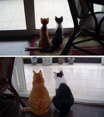 Historias de gatos, de aquellos tiempos